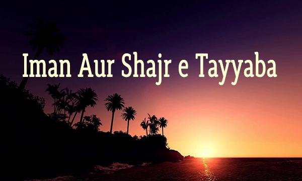 Iman Aur Shajr e Tayyaba